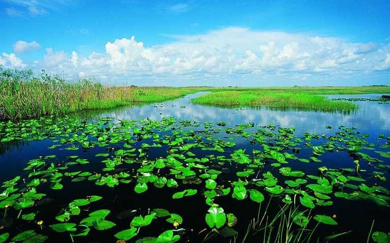 florida_in_new_york_program_everglades